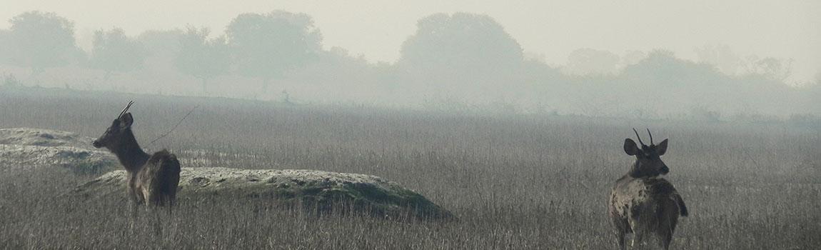 Keoladeo_Ghana_National_Park_Bharatpur_Rajasthan_India1