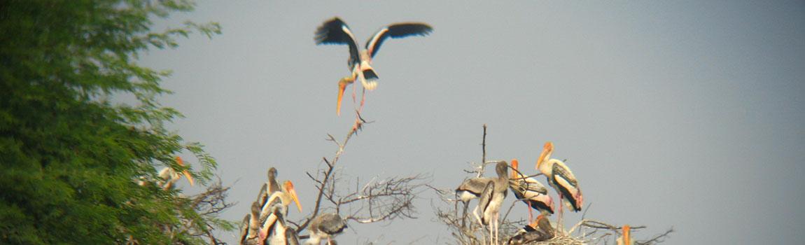 bharatpurbirdsanctuary