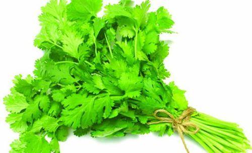 cilantro-coriander-leaves-500x500
